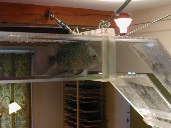Cool Aquariums: Fish Highway