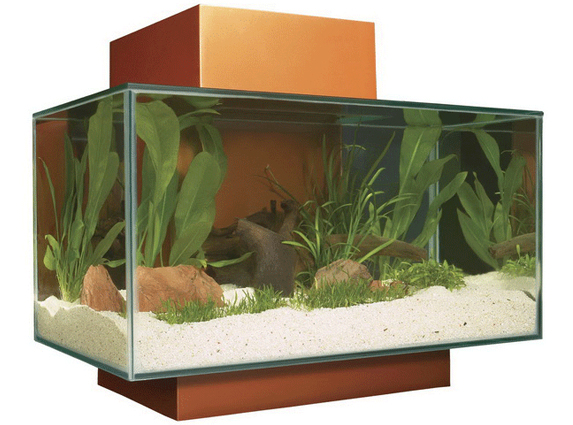 Cool Aquarium: Fluval Edge