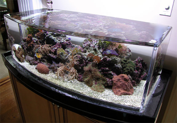 Cool Aquariums: Zero Edge