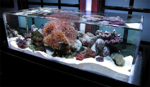 Cool Aquariums: Zero Edge